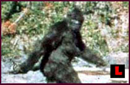 Bigfoot in Oregon Sasquatch Evidence Prompts New Beliefsl