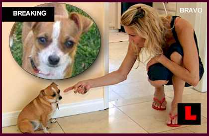 Brandi Glanville Dog Chica Never Found, Brandi Never Got Dog Back did brandi get her dog back every found finds chica