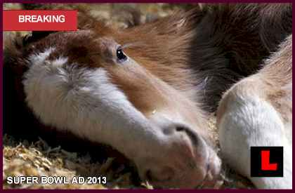 Budweiser Clydesdale Super Bowl Ad 2013 Seeks Baby Name for Foal commercial video