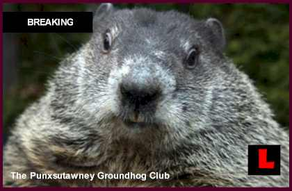 Did Phil See His Shadow Today - Punxsutawney Phil Battles Accuracy