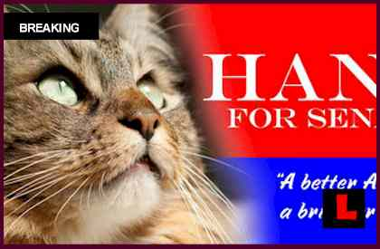 Hank The Cat Election Results Still Being Counted
