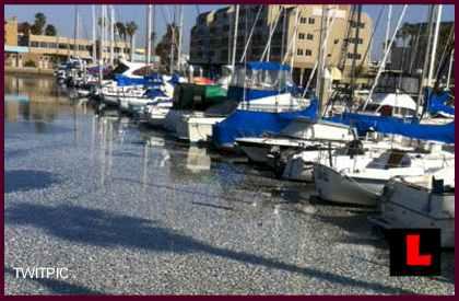 Redondo Beach Dead Fish Found In King Harbor