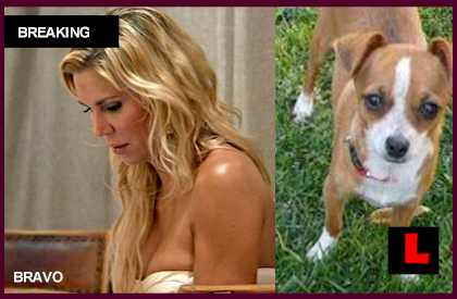 Brandi Glanville Dog Chica Missing, Never Found: Cameron Gets Fire