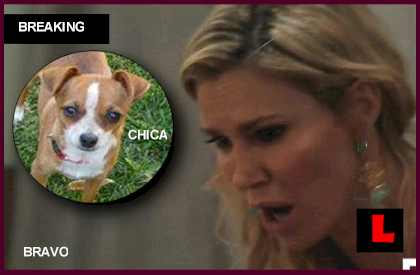 Brandi Glanville Dog Chica Stolen: Chihuahua Missing and Never Found what happened to who took
