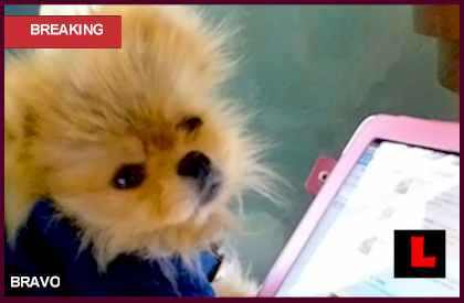 Giggy the Pom Alopecia Prompts Lisa Vanderpump Plans