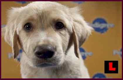 ,cute puppy,labrador puppy,puppy dogs,beagle puppy,hybrid puppy,boxer puppy,andrex puppy,puppy love,husky puppy,maltese puppy,yorkie puppy,dalmation puppy,funny puppy,pug puppy,pitbull puppy,puppy linux,bulldog puppy,collie puppy,sad puppy
