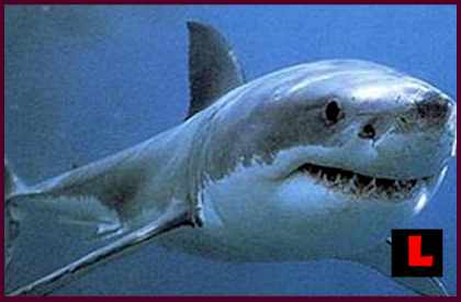 Shark Attack or Sightings Plague Florida & Manhattan Beach